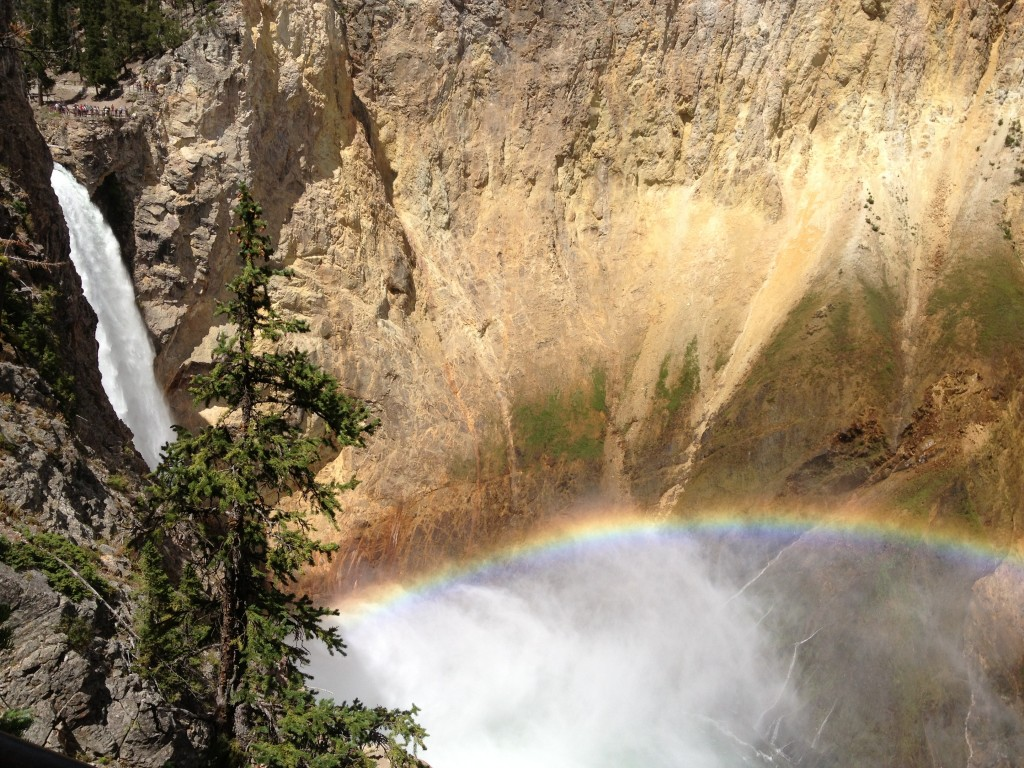 Our first glimpse of the Lower Falls in the Grand Canyon of Yellowstone.